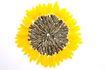 向日葵0052,向日葵,植物,