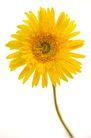 向日葵0061,向日葵,植物,