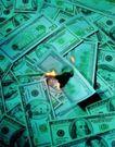 金融货币0132,金融货币,金融,起火的纸钞