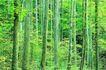森林与树木