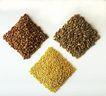 素材瓜果0092,素材瓜果,生活百科,果粒 青豆 香料