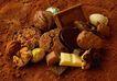 素材瓜果0100,素材瓜果,生活百科,奶油 巧克力 甜食