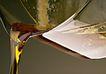 素材瓜果0104,素材瓜果,生活百科,植物油 容器 食物油