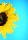 花园生活0031,花园生活,生活百科,花朵 花瓣 黄色