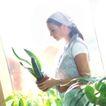 花园生活0032,花园生活,生活百科,植物 青蔬 绿叶