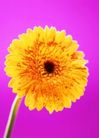 花园生活0037,花园生活,生活百科,花朵 鲜花 花梗