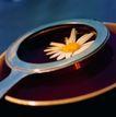 茶之文化0199,茶之文化,生活百科,菊花