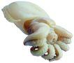 食材海鲜0044,食材海鲜,生活百科,