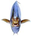 食材海鲜0049,食材海鲜,生活百科,