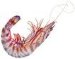 食材海鲜0050,食材海鲜,生活百科,