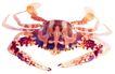 食材海鲜0054,食材海鲜,生活百科,
