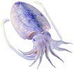 食材海鲜0055,食材海鲜,生活百科,