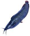 食材海鲜0060,食材海鲜,生活百科,