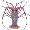 食材海鲜0063,食材海鲜,生活百科,