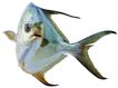 食材海鲜0064,食材海鲜,生活百科,