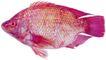 食材海鲜0067,食材海鲜,生活百科,