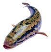 食材海鲜0071,食材海鲜,生活百科,