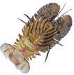食材海鲜0078,食材海鲜,生活百科,