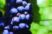 食物背景0053,食物背景,生活百科,一串葡萄