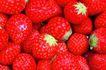 鲜味食物0062,鲜味食物,生活百科,草莓