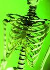 医疗与技术0001,医疗与技术,医学医药,人的骨骼 骷髅
