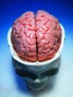 医疗与技术0019,医疗与技术,医学医药,脑部 人的大脑