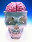 医疗与技术0020,医疗与技术,医学医药,头部 大脑模型