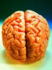 医疗与技术0021,医疗与技术,医学医药,人类的大脑