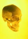 高科技治疗0001,高科技治疗,医学医药,骷髅 人的头骨