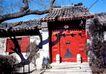 北京胡同0105,北京胡同,中华图片,古建 晴天 古树