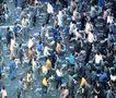 北京胡同0112,北京胡同,中华图片,北京街头 自行车 上班人潮