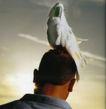个性一族0194,个性一族,广告创意,鹦鹉