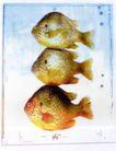 动物创意0001,动物创意,广告创意,三条鱼 热带鱼