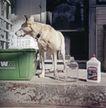 动物创意0004,动物创意,广告创意,忠实狗狗 看门
