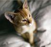动物创意0006,动物创意,广告创意,猫咪 长胡须