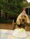 动物创意0007,动物创意,广告创意,狗狗的生日 小蛋糕