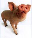 动物创意0008,动物创意,广告创意,小猪 大鼻子