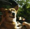 动物创意0009,动物创意,广告创意,狗狗也兜风 开心坐车