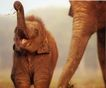 动物创意0011,动物创意,广告创意,小象