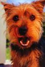 动物创意0013,动物创意,广告创意,可爱狗狗 棕色毛发