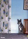 动物创意0014,动物创意,广告创意,看家狗 忠实伙伴