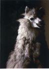动物创意0015,动物创意,广告创意,特色狗狗