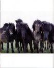 动物创意0017,动物创意,广告创意,野马
