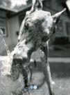 动物创意0022,动物创意,广告创意,
