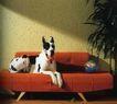 动物创意0027,动物创意,广告创意,
