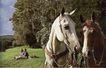 动物创意0032,动物创意,广告创意,动物 马匹 出游