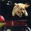 动物创意0035,动物创意,广告创意,小狗 动物 宠物
