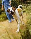 动物创意0037,动物创意,广告创意,名贵狗 绿叶 野外