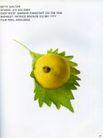 最佳食品饮料广告0354,最佳食品饮料广告,广告创意,