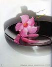 花朵创意0006,花朵创意,广告创意,粉红花瓣